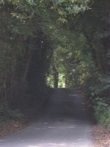 A country path in English wine country