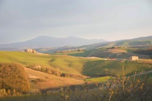 The hills surrounding Montalcino.  Photo by Morgan Dawson Photography.