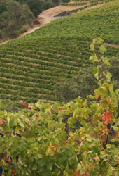 Pedroncelli Home Ranch Vineyard