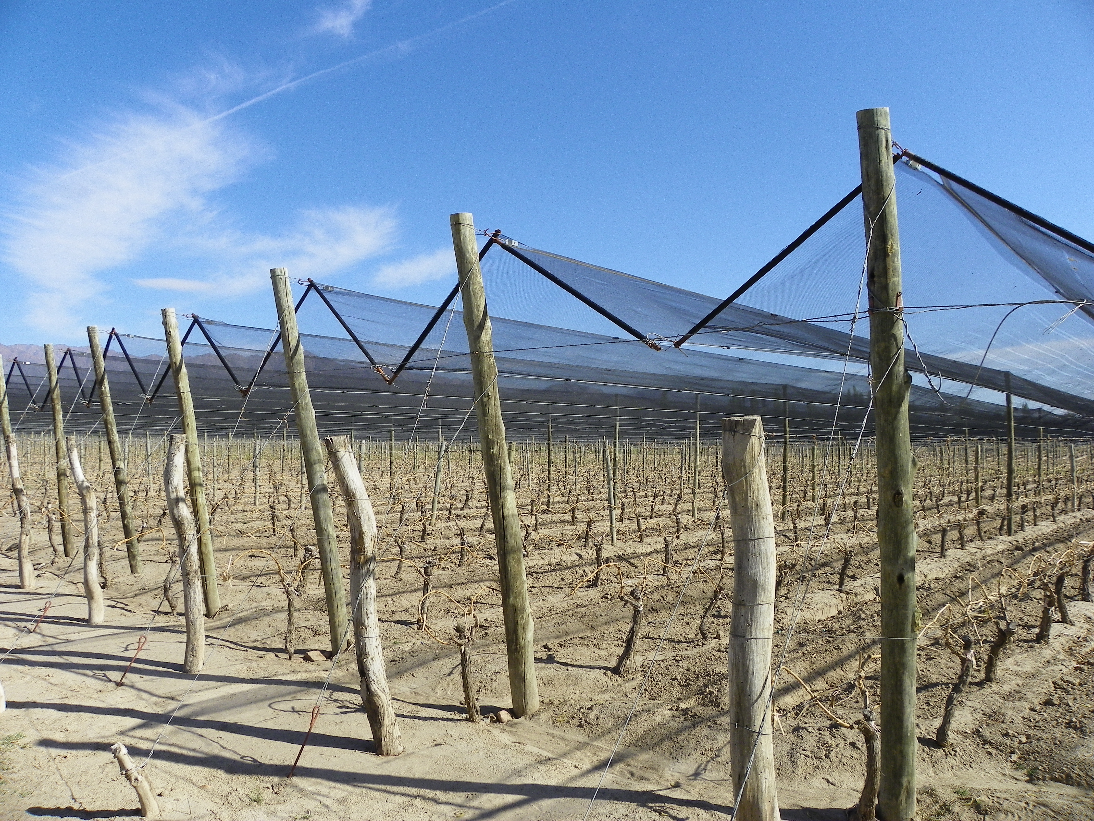 Going Coastal: Chilean Winemakers Pursue a Cooling Trend