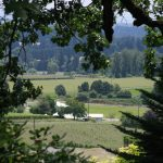 Pick up a point and shoot and you can get some pretty spectacular shots. The Willamette Valley is a photographer's dream. This is a lovely framed vineyard shot taken from the Sokol Blosser tasting room deck.
