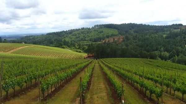 Wineries_Hwy_99