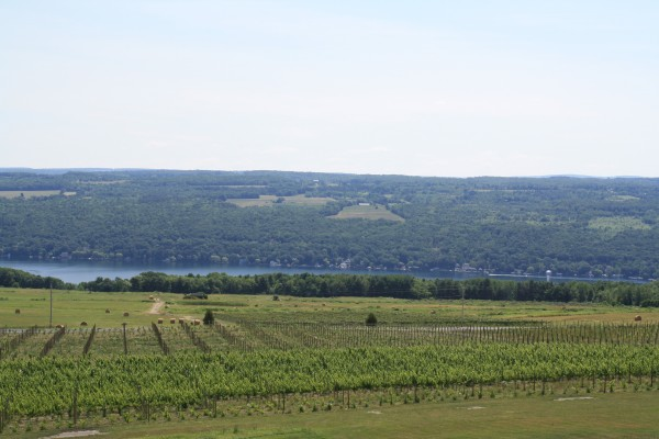 Vineyards at Heron Hill in Hammondsport, overlooking Keuka Lake