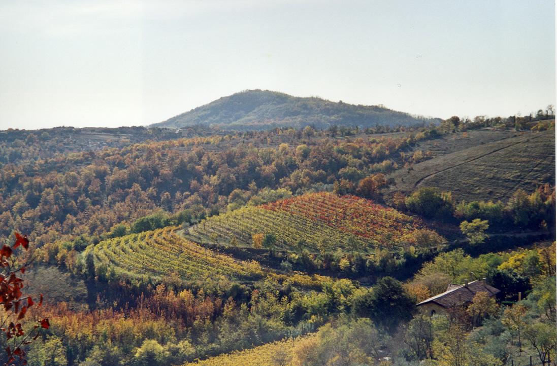 Vigneto Colli Euganei zona sud