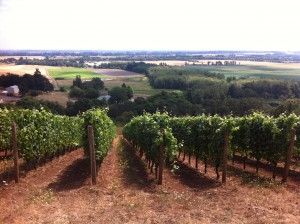 Oregon vines: would they be more attractive if they were from Rogue Valley or Umpqua Valley?
