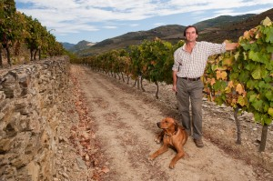 Charles Symington in the Douro Vineyards with his faithful companion