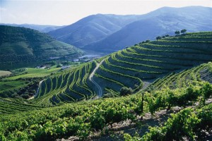 Dow's Quinta Bonfim, one of the many vertical vineyards in the Douro River Valley, Portugal