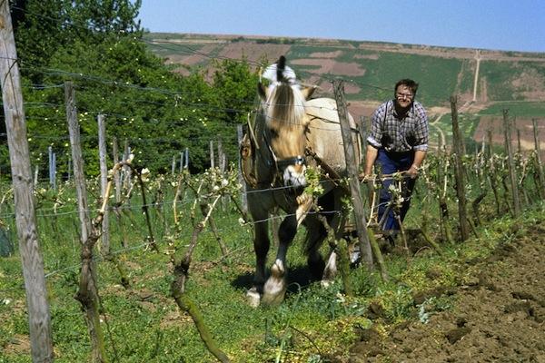 Biodynamic viticulture in Germany - credit German Wine Institute