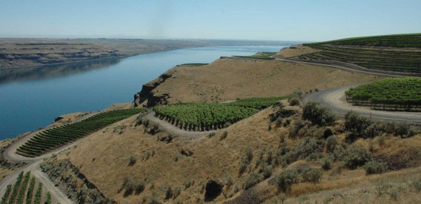 The Benches, a vineyard owned by investors in Long Shadows Vintners, including Allen Shoup, is a spectacular Horse heaven Hills site along the Columbia River, supplying grapes to many producers.