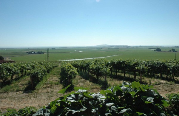 The view from Martinez & Martinez's vines, with Chateais Champoux in the distance at left. Martinez & Martinez may be the first Hispanic-owned vineyard in the state, and the winery is only the second Hispanic-owned winery in Washington.