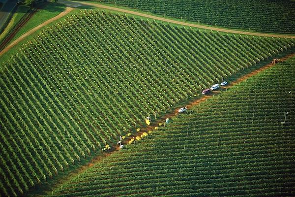 Palate - Trump aerial harvest