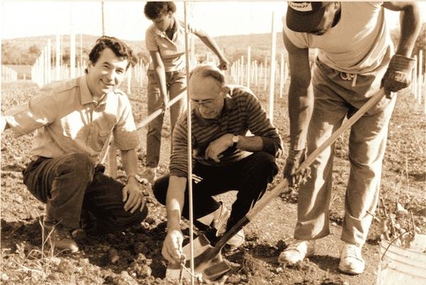Zonin planting 1976