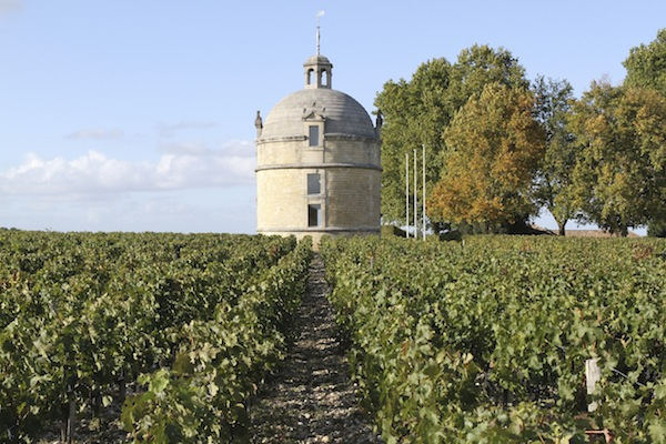 Vineyard at Chateau Latour, Bordeaux