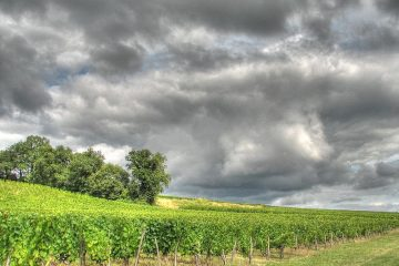 800px-Bourg_vineyards