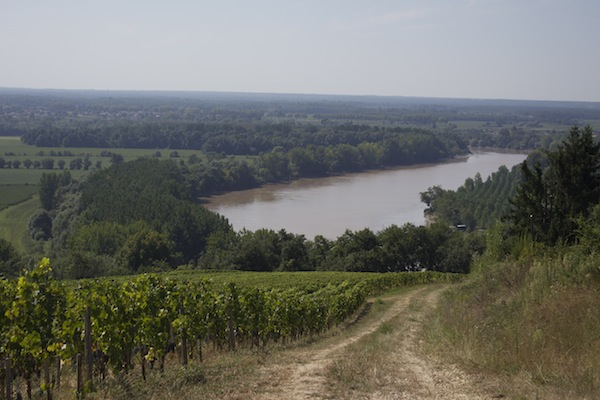 Chateau Biac view of Garonne River from vineyard
