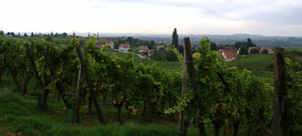 Zoztenberg Vineyard