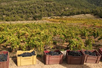 grenache at vinyes domenech