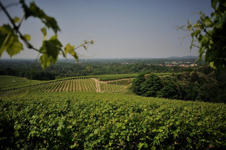 A vineyard in Gattinara