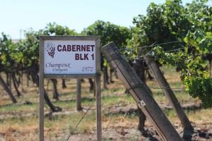 Original Plantings at Champoux Vineyards