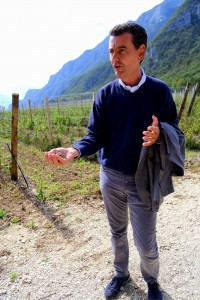 Ferrari-Marcello-vineyard