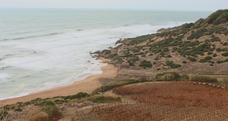 Vineyard on ocean floor in Sicily (owned by Mandrarossa vineyards)