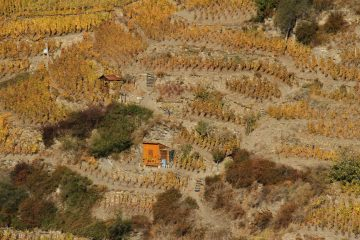 detail of vispertermin vineyards
