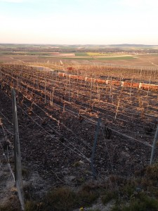 regular vineyard now