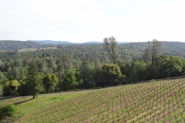 vineyard at Gold Mountain