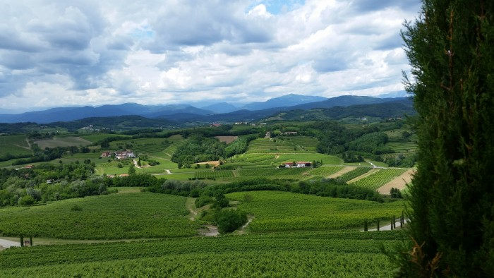 Collio's vineyards on the indistinguishable border with Slovenia