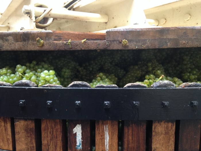 Pressing Chardonnay at Lassaigne