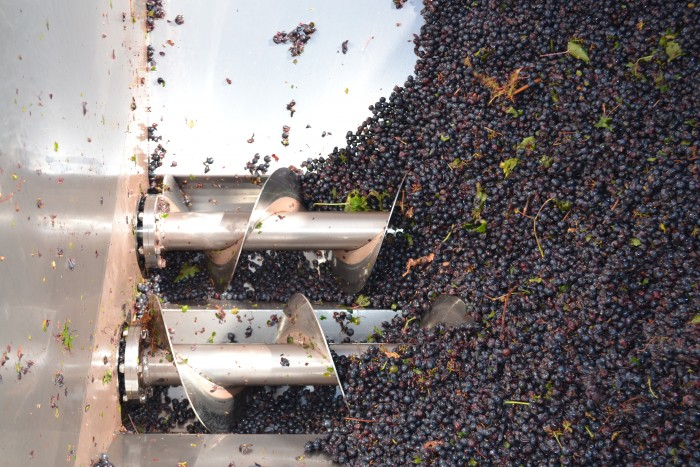 Sangiovese in crusher-destemmer