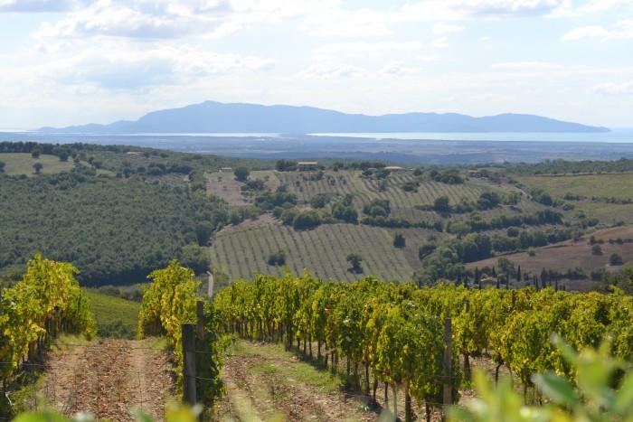 Vineyards near the sea