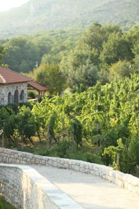 Vineyard at Trvdos Monastery, near Trevinje, Bosnia