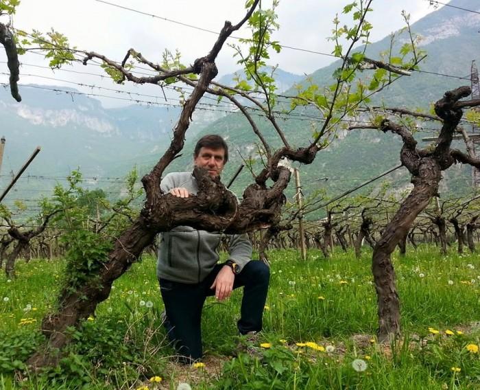A.Armani, old vine