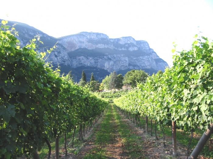 Armani, vineyards