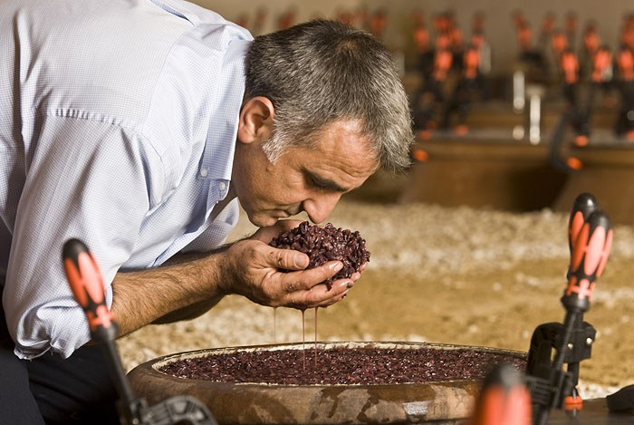 Giusto Occhipinti checking the grapes in the jar of clay in the wine cellar of Azienda Agricola Cos - Vittoria