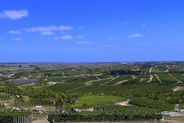 bodega-garzon-vineyards-sunshine