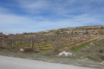 Vineyards near Hebron