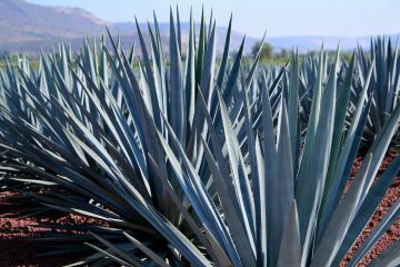 patron-blue-agave-highlands