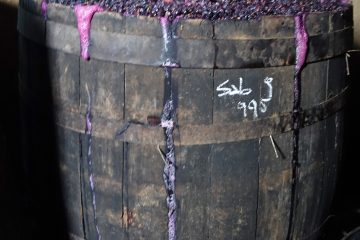 Huaso de Sauzal winemaking