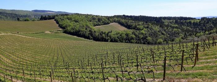 santedame-ruffino-vineyards