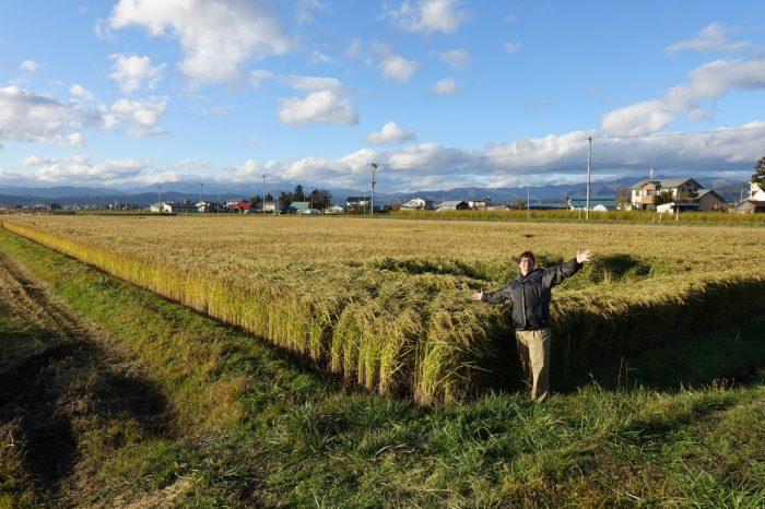 field-of-rice