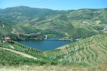 douro-terraced-vineyards