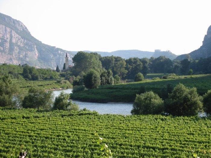 A vineyard in Valdadige