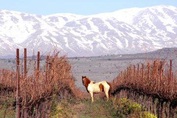 ein-zivan-with-horse