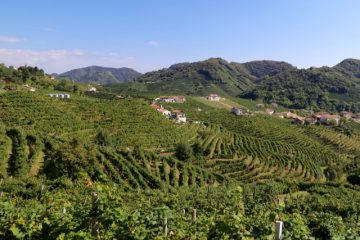prosecco-carizze-vineyards
