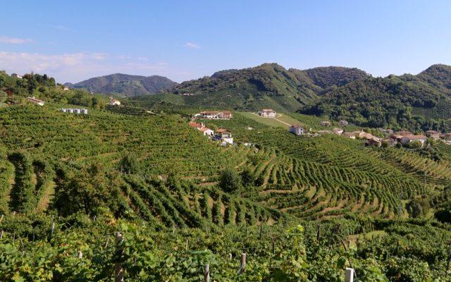 prosecco-carizze-vineyards