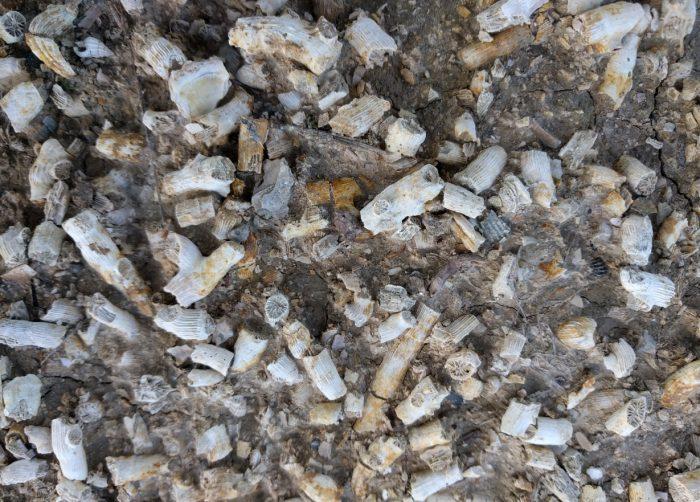 fibbiano-vineyard-soils-2