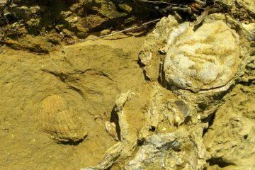 fibbiano-vineyard-soils