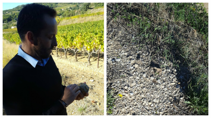 Rickman with a stone from the vineyard; the garrigue.